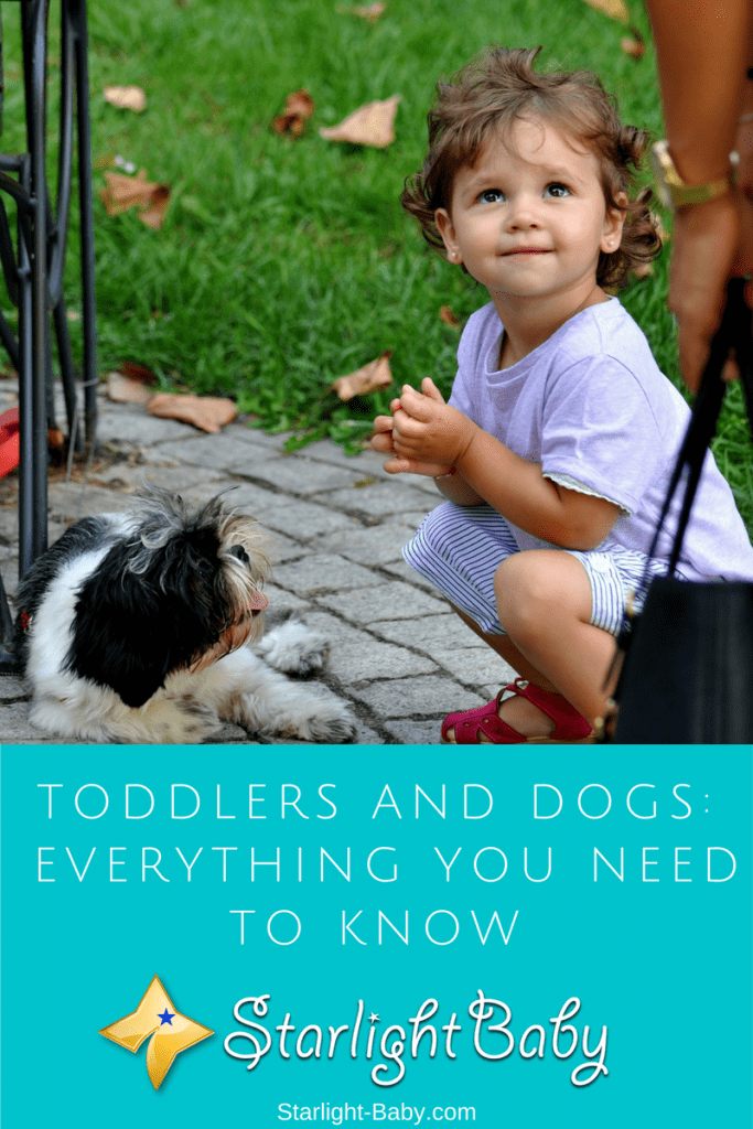 Toddlers And Dogs – Everything You Need To Know